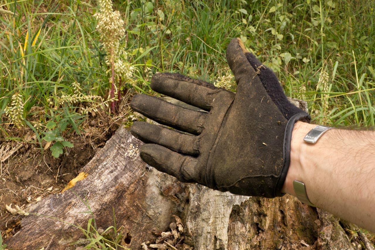 paume-gants-mongoose