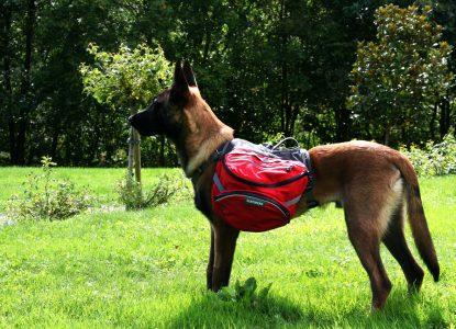Sac de randonnée pour chien