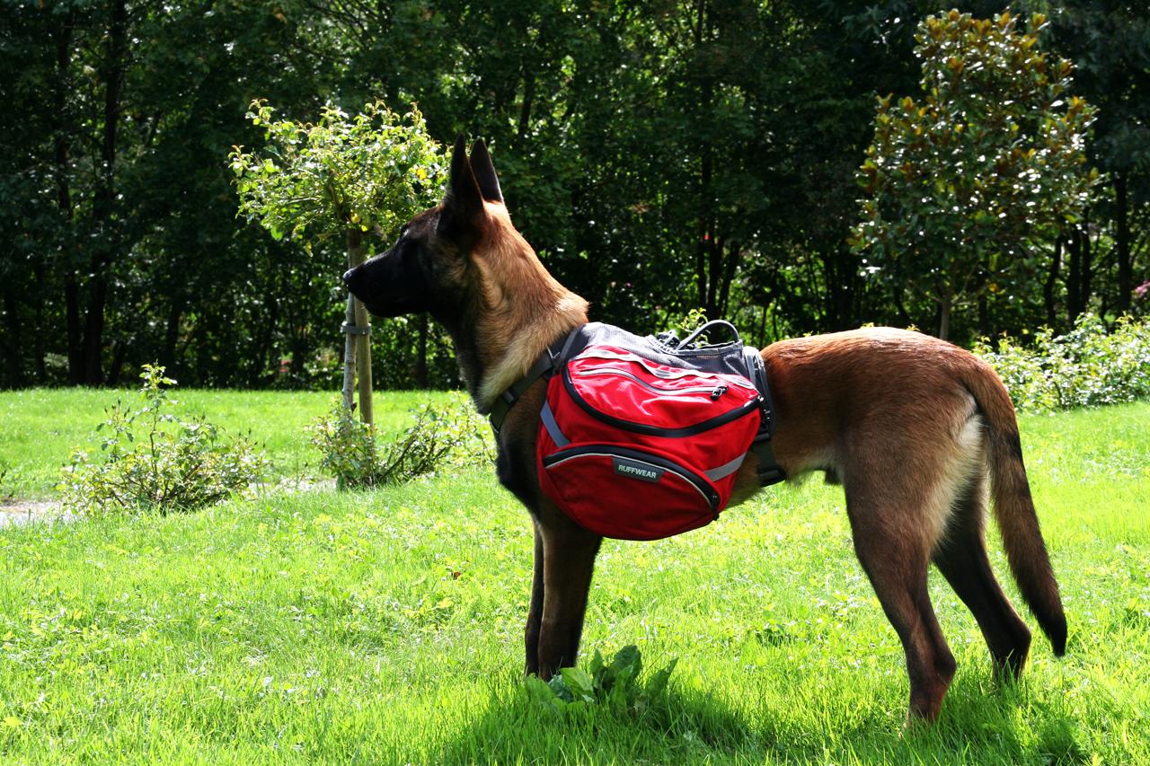Sac de b t palisades le sac de randonn e id al pour chien - Lanceur de balles pour chien ...